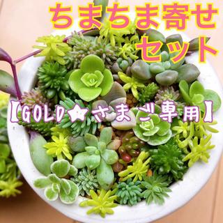 【ご専用】多肉植物 ♡ ちまちま寄せセット ♡ 8【※8/31(月)発送】(その他)