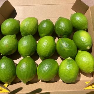 とれたて!広島県江田島産グリーンレモン(フルーツ)