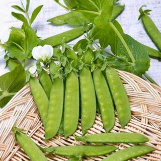 秋まき❗️❗️たくさん取れる美味しい『絹さやえんどう』です 種20個(野菜)