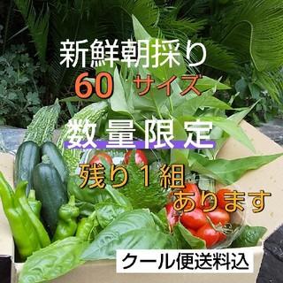 新鮮野菜【野菜おまかせ♪野菜おためしセット】茄子&空芯菜増量セット当日発送  (野菜)