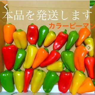 新鮮野菜広島県産自然栽培農薬不使用色彩り鮮やかカラーピーマン箱詰めセット(野菜)