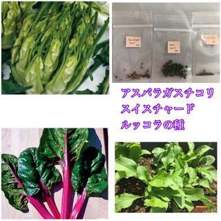 アスパラガスチコリ50粒とスイスチャード種30粒、ルッコラ種30粒(野菜)