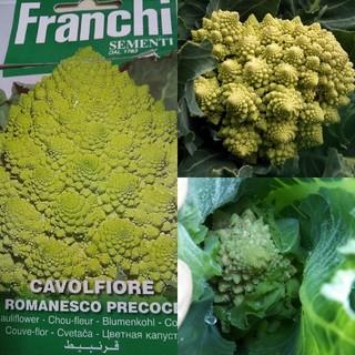 野菜の種 秋冬準備 人気の4種 芽キャベツ ロマネスコなど(その他)