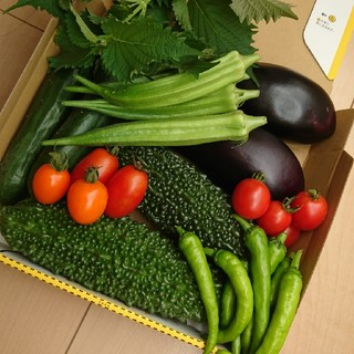 栄養満点②【完全無農薬】お野菜詰め合わせ(野菜)