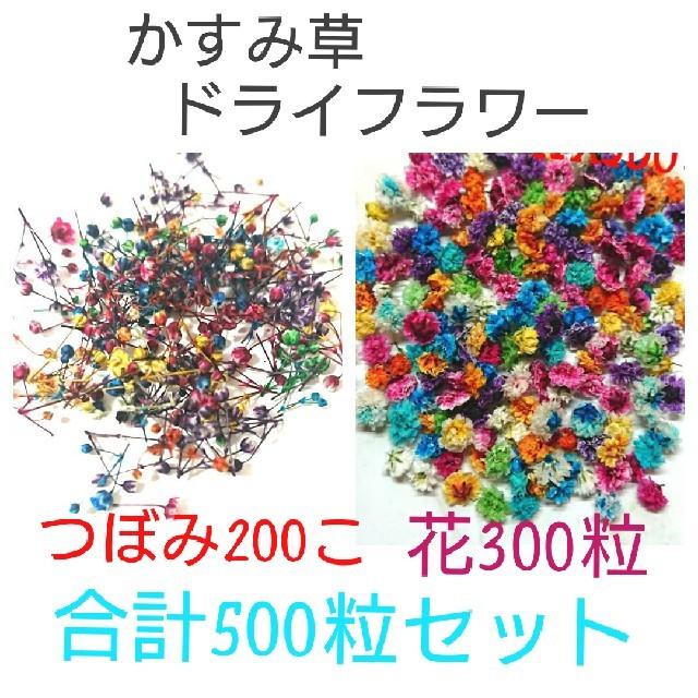 【無選別】かすみ草ドライフラワーMIX ハンドメイドのフラワー/ガーデン(ドライフラワー)の商品写真