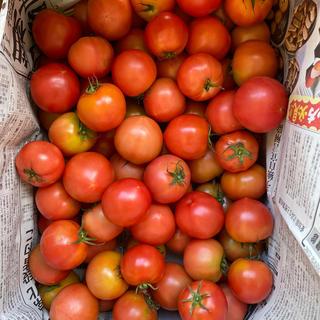 麗月小ぶり6キロ 6(野菜)