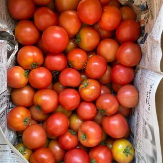 麗月小ぶり6キロ ラスト(野菜)