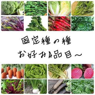 お好み4品目〜 ★固定種★野菜の種セット(野菜)