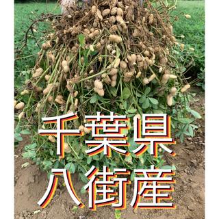 9月2週目収穫分 千葉県八街産おおまさり2キロ(梱包資材込み)(野菜)