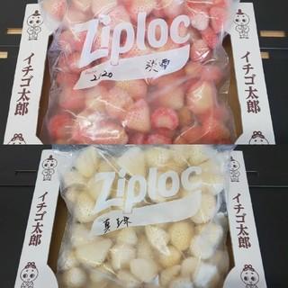 なつ様専用 真珠姫&淡雪 冷凍イチゴ 各1キロセット(フルーツ)