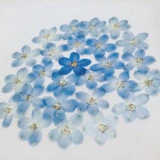 86 押し花セット✿即日発送♡ ハンドメイド 素材 小花(ドライフラワー)