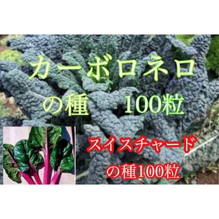 カーボロネロ種100粒とスイスチャード種100粒(その他)