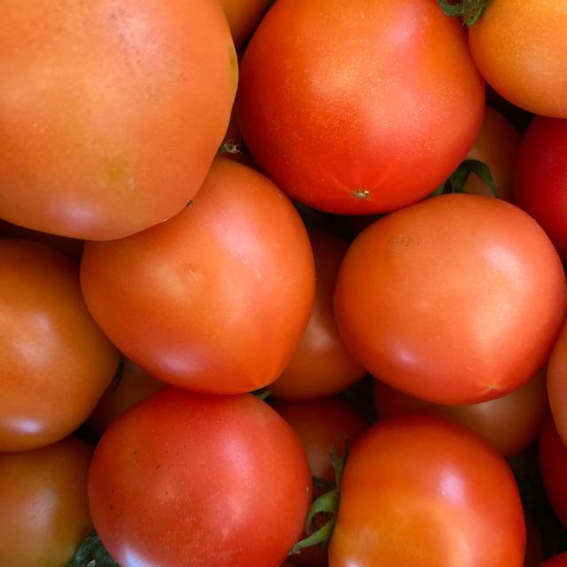 麗月小ぶり6キロ 3 食品/飲料/酒の食品(野菜)の商品写真