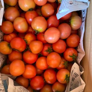 麗月小ぶり6キロ 3(野菜)