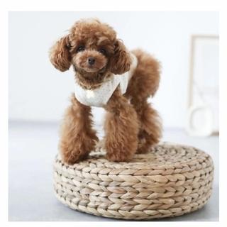 ドットノースリーブトップス(犬)