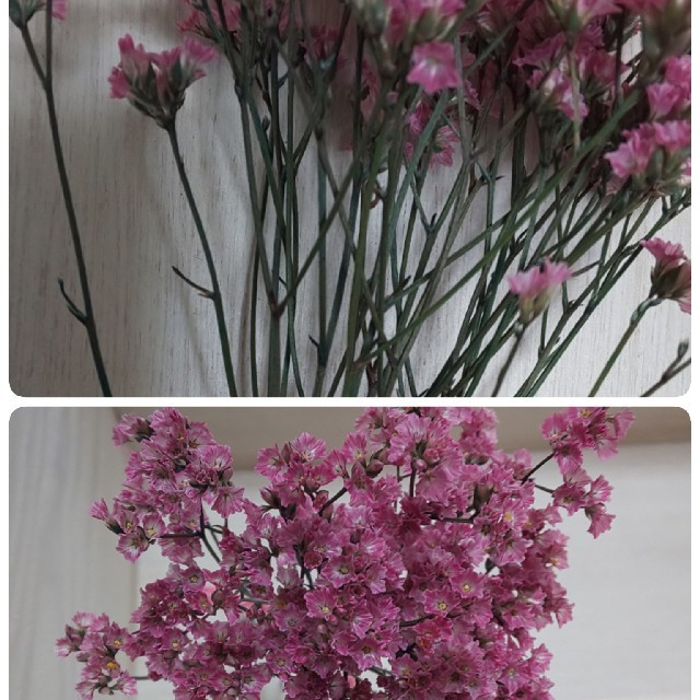 ハイブリッドスターチス プリザーブドフラワー♬ピンク♬少量♬ハンドメイドに★ ハンドメイドのフラワー/ガーデン(ドライフラワー)の商品写真
