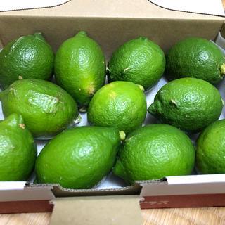 愛媛県産グリーンレモン    小さめサイズ  1キロ(フルーツ)