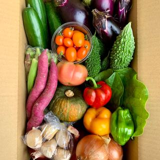 淡路島【 きまぐれ 】14種類 野菜set(野菜)