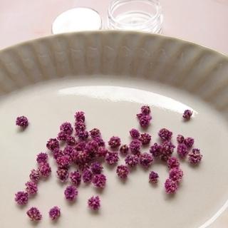 かすみ草 ドライフラワー 紫 葡萄色 レジン 封入素材(ドライフラワー)
