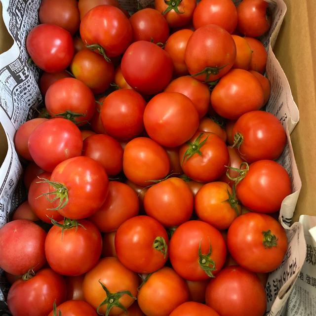 麗月小ぶり6キロ 2九州、沖縄発送不可 食品/飲料/酒の食品(野菜)の商品写真