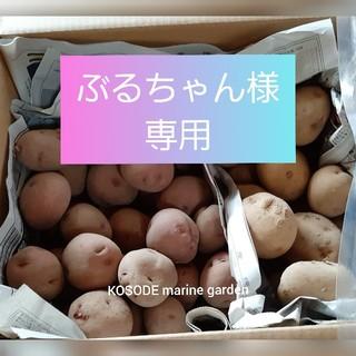 専用)アンデスレッド & きたあかり セット(野菜)