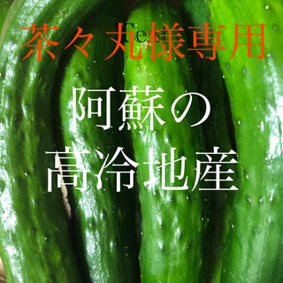 茶々丸様専用 阿蘇のきゅうり1.5kg 予約分(野菜)