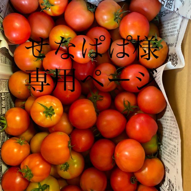 せなぱぱ様専用ページ 食品/飲料/酒の食品(野菜)の商品写真