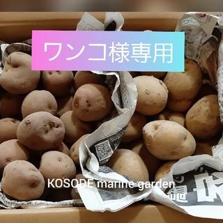 専用)アンデスレッド & きたあかりセット(野菜)