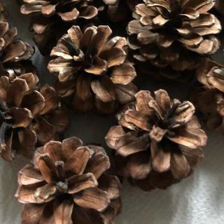 ドライフラワー花材まつぼっくり20個(ドライフラワー)