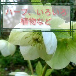 花、ハーブなど(その他)