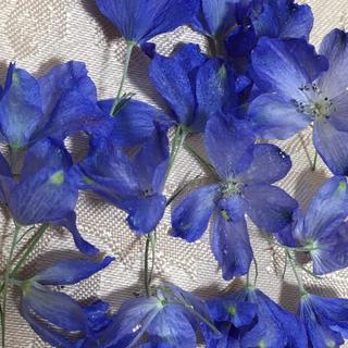 ドライフラワー 青色の花(ドライフラワー)