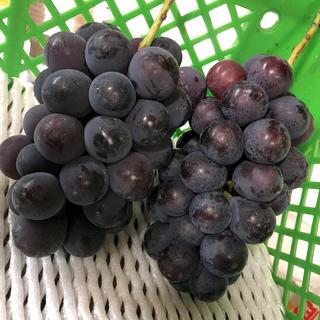のん様 長野パープル家庭用2.5キロ(フルーツ)