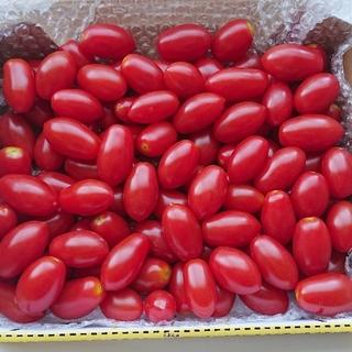 北海道産 ティンカーベル トマト 100粒(野菜)