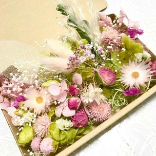 グリーンピンク*シャイニーシャイニー*ハーバリウム花材ドライフラワー 花材セット(ドライフラワー)