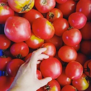 北海道産 規格外トマト 10㎏(野菜)