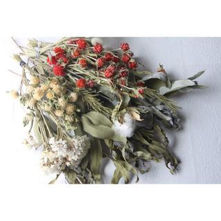 赤系花材セットC ハーブ.ユーカリ.千日紅など(ドライフラワー)