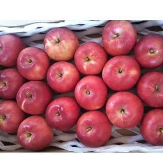 小粒りんご 18個入り 秋田県横手市産 品種さんさ(フルーツ)