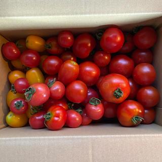 ミニトマト、ミディトマト詰め合わせ1、8kg(野菜)