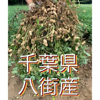 9月15日収穫分 千葉県八街産おおまさり2キロ(梱包資材込み)(野菜)