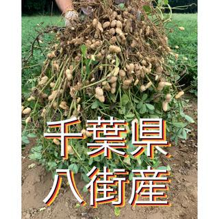 9月9日収穫分 千葉県八街産おおまさり1キロ(野菜)