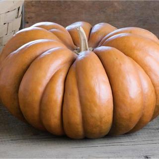 かぼちゃ  ムスクドプロヴァンス 種 10粒(野菜)