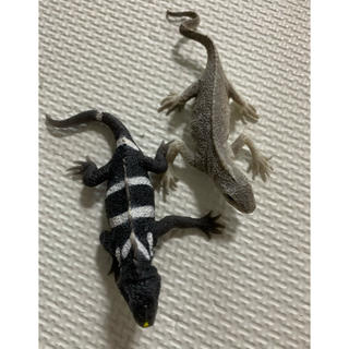 イグアナ&co(その他)