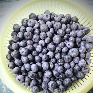 @aa様専用 群馬県産冷凍ブルーベリー (フルーツ)