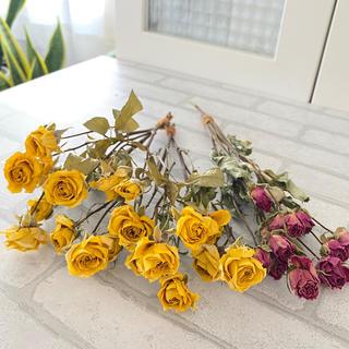 ドライフラワー花材 スプレーバラ(ドライフラワー)