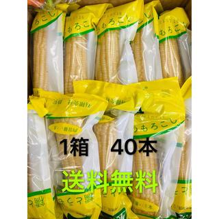白糯玉米 粘玉米 40本  糯とうもろこし トウモロコシ  株式会社静安(野菜)