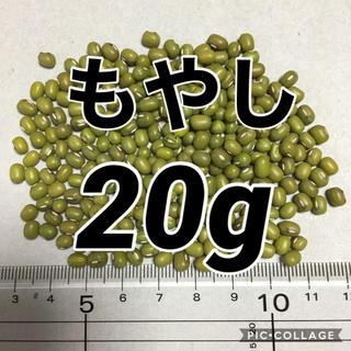 【20g】もやし 緑豆 タネ 種 (野菜)