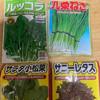 野菜 種 4種類セット 水耕栽培 家庭菜園(野菜)
