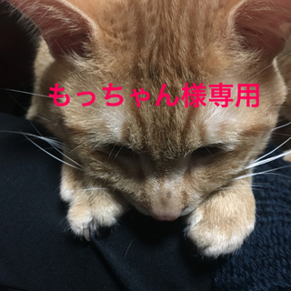アツギ(Atsugi)のアツギ 黒いシアータイツ ストッキング② L〜LL ブラック 25デニール✩︎(タイツ/ストッキング)