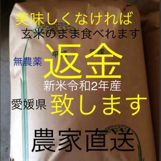 かずちゃん米 無農薬 新米純こしひかり30㎏ 玄米(米/穀物)