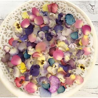 ドライフラワー 花材 素材 ビオラ フリルビオラ バラ 花びら(各種パーツ)